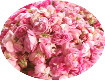 Medium Flower Tray