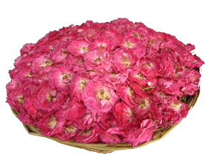 Big Flower Tray