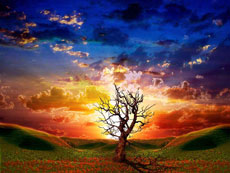 mystical_tree1